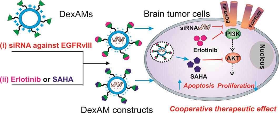 [PDF] Nanotechnology for regenerative medicine
